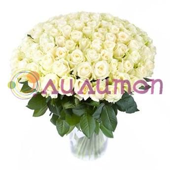 101 белая роза - фото 4760