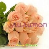 9 персиковых роз